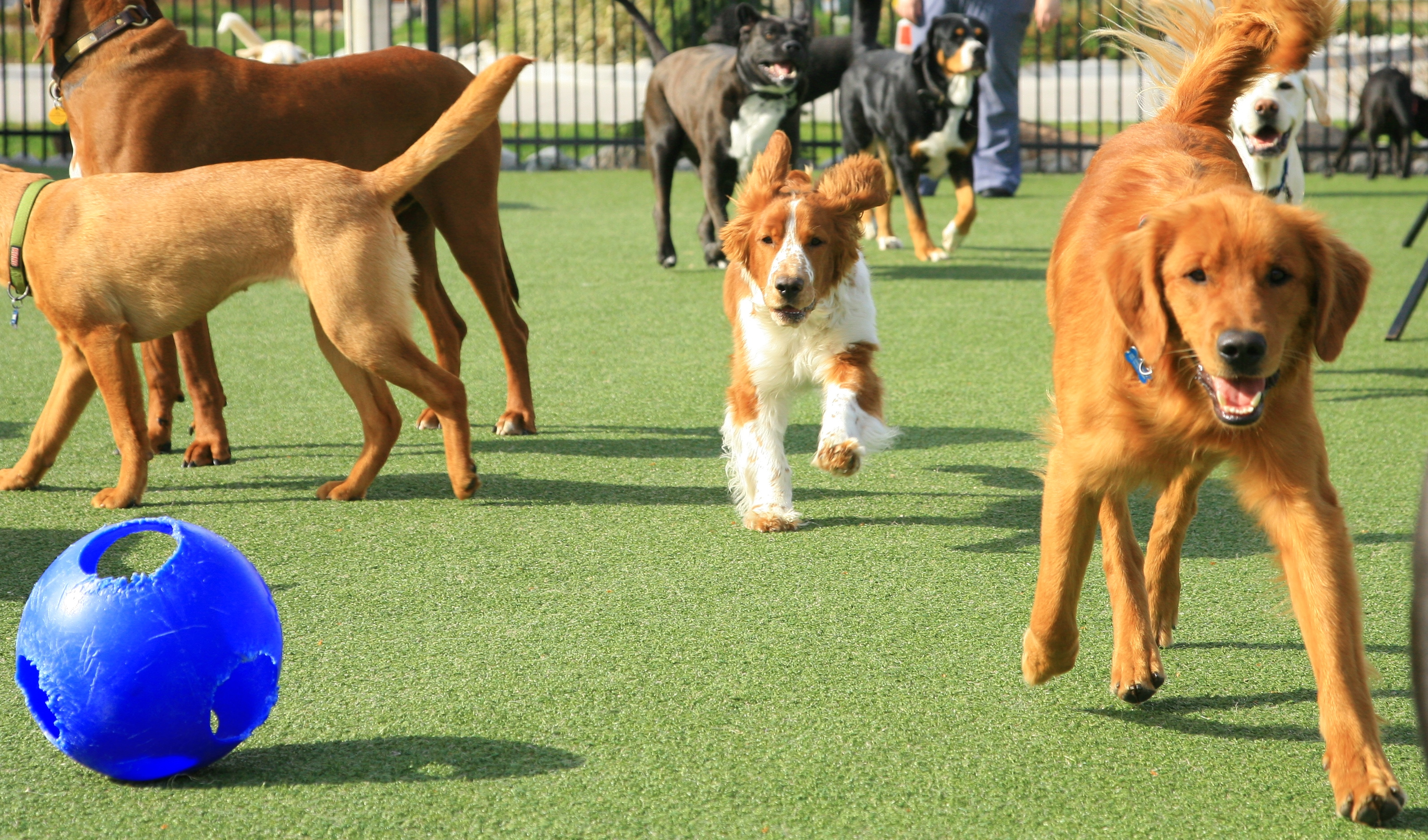 Have You Thought About Doggy Day Care For Your Dog?